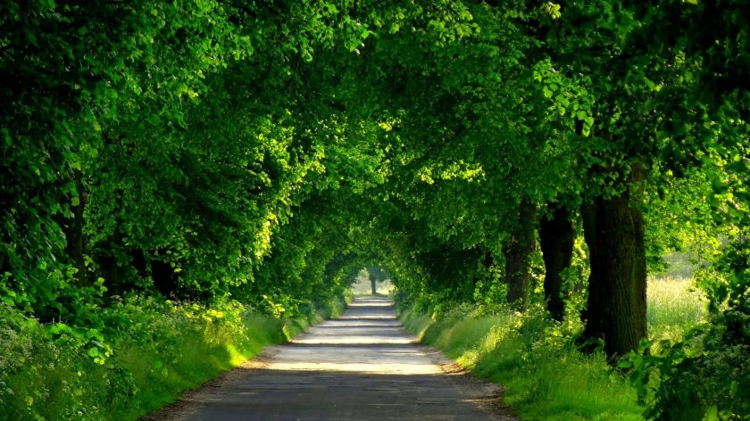 forests-nature-path-trees-walk-green-park-forest-spring-road-beautiful-wallpapers-free-1920x1080